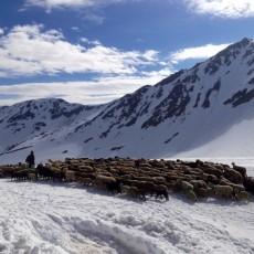 Transhumance – Europe's Last Nomads