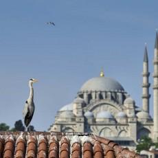 Wild Istanbul