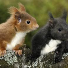 Secrets of Squirrels