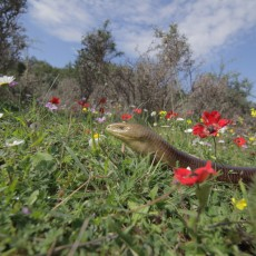 Greece – The Wild Side